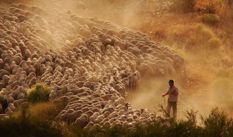 <span style='color:#780948'>ARCHIVED</span> - Huelva province on alert for Brazilian strain of Covid due to outbreak among sheep shearers