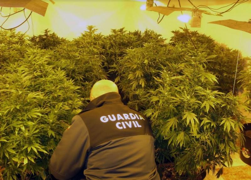 Illegal marijuana plantations held responsible for frequent power failures in Sevilla