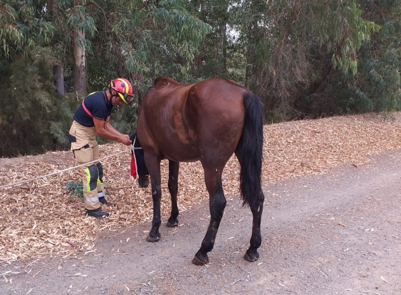 Horse rescued with crane after falling in Seville ravine